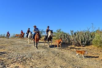 Horseback activities page