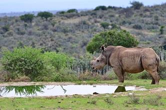 Rhino - Activities page