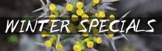 Latest Specials